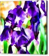 Iris 63 Acrylic Print