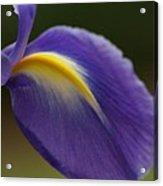Iris 7 Acrylic Print
