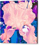 Iris  9 Acrylic Print