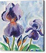 Iris Blooms Acrylic Print