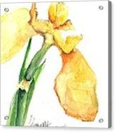 Iris Blooms  Acrylic Print by Sherry Harradence