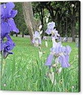 Iris Blues Acrylic Print
