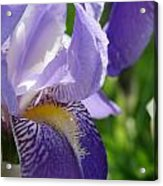 Iris Close Up 4 Acrylic Print