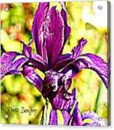 Iris Acrylic Print by Debbie Sikes