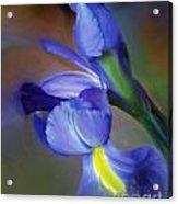 Iris Dream Acrylic Print