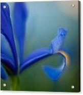 Iris Edge Acrylic Print