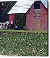 Iris Field And Barn Acrylic Print