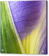Iris Flower Close Up Acrylic Print by Natalie Kinnear