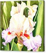 Iris Flower Dancing Petals Acrylic Print