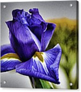 Iris Flower Macro Acrylic Print