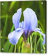 Pale Purple Iris - Impressions Of Spring Acrylic Print