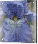 Iris Heart Acrylic Print
