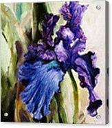 Iris In Bloom 2 Acrylic Print