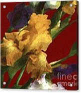 Iris In The Rough Acrylic Print