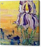 Iris Acrylic Print by Karen Carnow