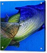 Iris On Blue Acrylic Print