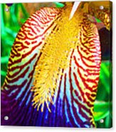 Iris Petal By Jan Marvin Acrylic Print