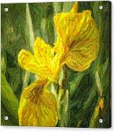 Iris Pseudacorus Yellow Flag Iris Acrylic Print