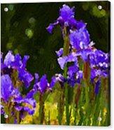 Iris Radiance Acrylic Print