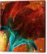 Iris Sonata 3 Acrylic Print