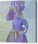 Iris Texture Acrylic Print