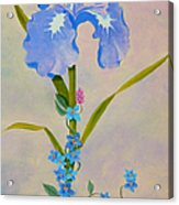 Iris With Forget Me Nots Acrylic Print