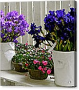 Irises And Impatiens Acrylic Print