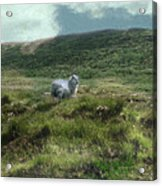 Irish Countryside Acrylic Print