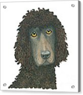 Irish Water Spaniel Acrylic Print