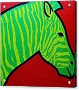 Irish Zebra Acrylic Print