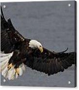 Iron Eagle  Acrylic Print by Glenn Lawrence