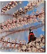 Irresistible Blossom Acrylic Print