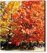 Is Autumn Already Acrylic Print