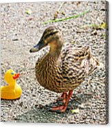 Is Everything Ducky? Acrylic Print