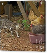 Is She Really In My Litter Pan Acrylic Print