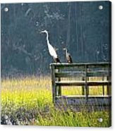 Is That Daddy? Acrylic Print