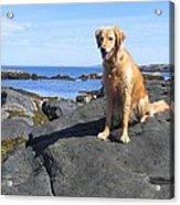 Island Dog Acrylic Print