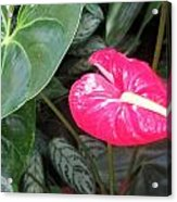 Island Flower Acrylic Print