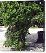 Island Tree Acrylic Print