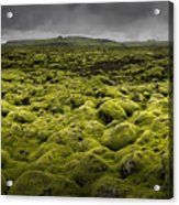 Islandmoos I Acrylic Print