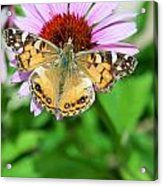 Isn't She Lovely Acrylic Print