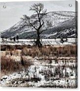 Isolation In Yellowstone Acrylic Print