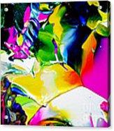 Botanical # 1218 Acrylic Print
