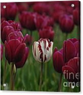 It Is Beautiful Being Different Acrylic Print by Bob Christopher