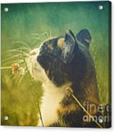 It Smells Like Summer Acrylic Print
