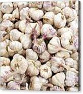 Italian Garlic Bulbs Acrylic Print