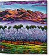 Italian Orchard Acrylic Print