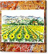 Italy Sketches Sunflowers Of Tuscany Acrylic Print