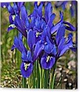 Ithaca Spring Acrylic Print