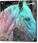 It's 1970 And I Want A Groovy Rainbow Pony Acrylic Print